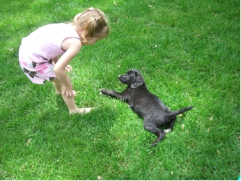 Labrador-Puppy-1
