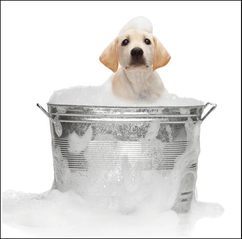 Jenny-Ireland-Barossa-Pet-Grooming-Dog-Clipper-Adelaide