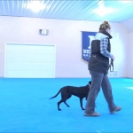 (VIDEO) Dog Training: Rouser Boot Camp Dog Training