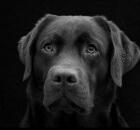dog-996489_960_720